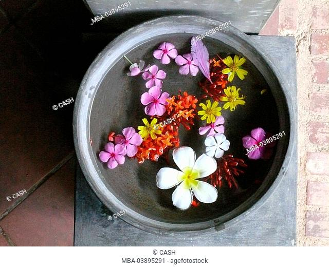 Ayurveda, peel, temple-bloom, vessel, water, water-surface, Frangipani, temple-flowers, Plumeria alba, bloom, differently-colorfully, symbol, wellness, medicine