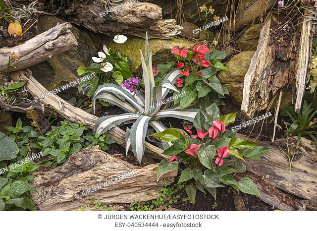 Plants in the tropical hall of butterfly park, Burg, Fehmarn, Baltic Sea, Schleswig-Holstein, Germany, Europe