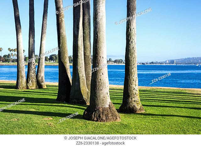 Grouping of palm tree trunks on the grass. San Diego, CA, USA