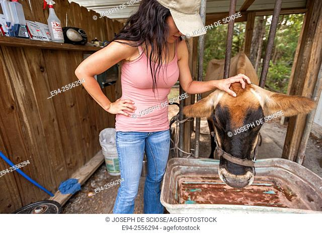 38 year old brunette woman petting a cow in a barn