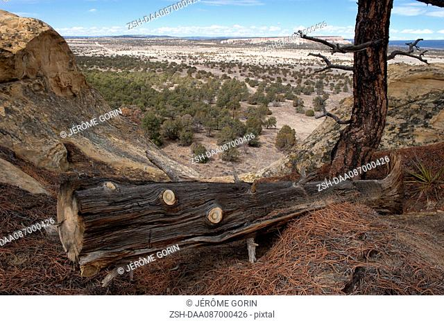 Fallen tree trunk overlooking arid landscape in New Mexico, USA