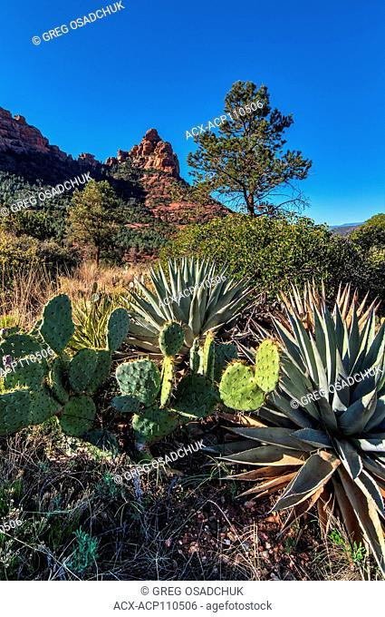 Schnebley Hill Area, Near Sedona, Arizona, USA