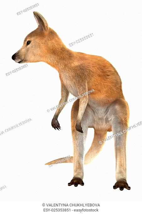 3D digital render of a red baby kangaroo isolated on white background