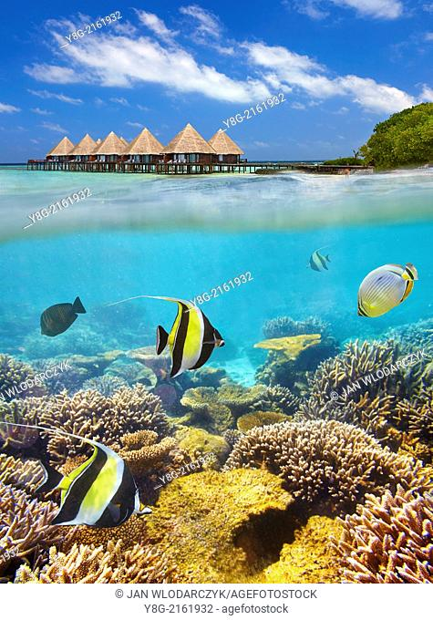 Half underwater view with reef and fishes, Maldives, Indian Ocean