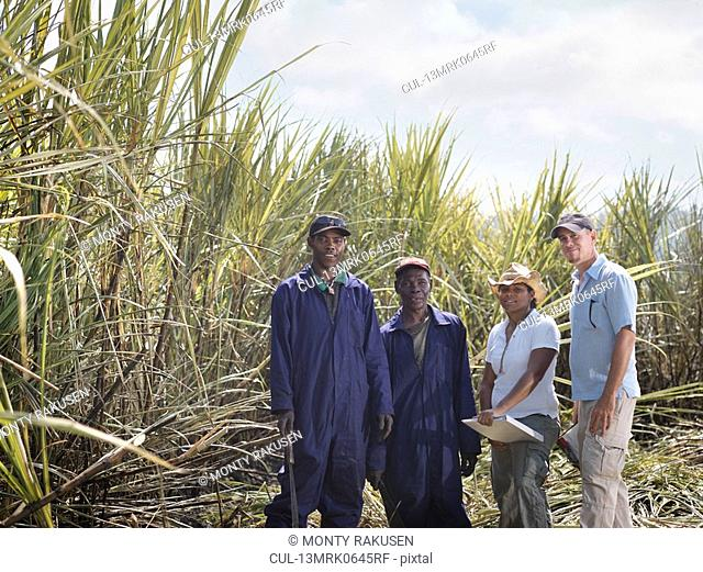 Sugar Cane Workers In Field