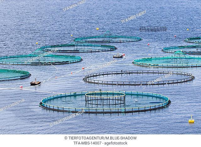 coalfish farm
