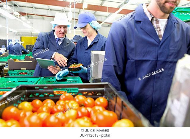 Quality control workers inspecting and packing ripe red tomatoes in food processing plant
