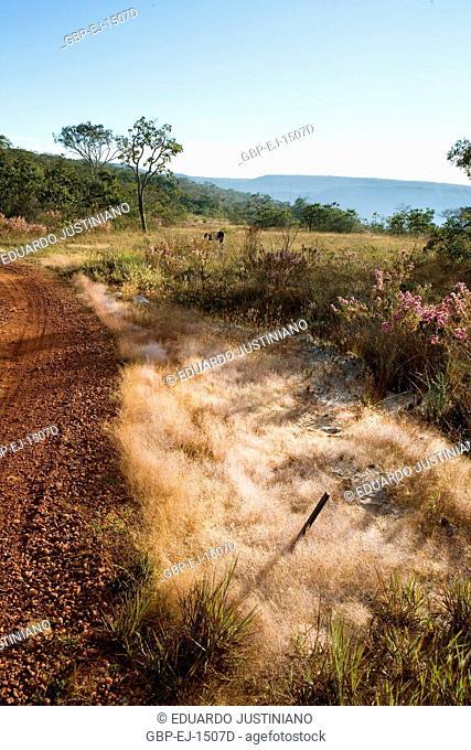 Dew, Vegetation, Savannah, Condensation, São Gonçalo do Rio Preto, Minas Gerais, Brazil