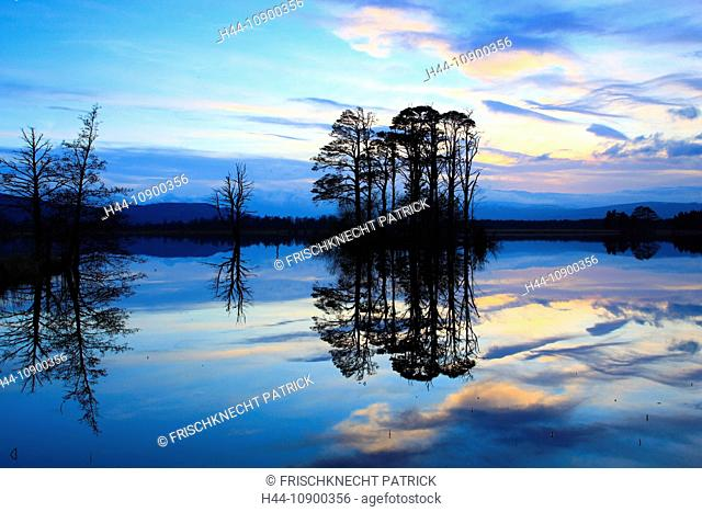 Evening, dusk, view, tree, mountain, trees, Cairngorms, highlands, highland, pine, Loch, Loch Mallachie, Mallachie, national park, park, panorama