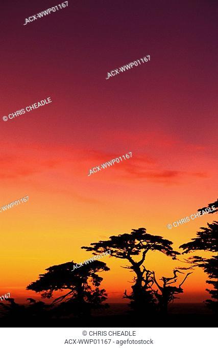 USA, California, Carmel, Highway 1 on coast, Pebble beach, Juniper trees at sunset