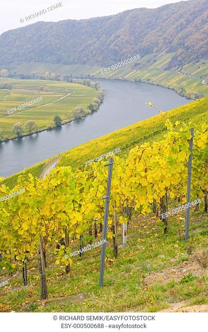 Moselle Valley, Piesport, Rheinland Pfalz, Germany