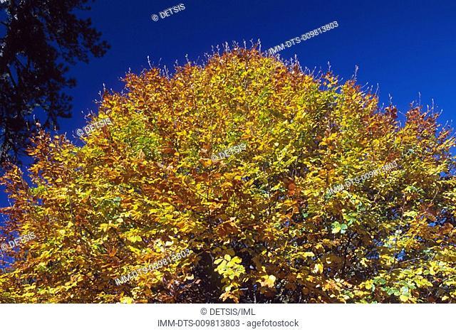Tree at Xerolaki gully , Mount Olympus, Macedonia Central, Greece