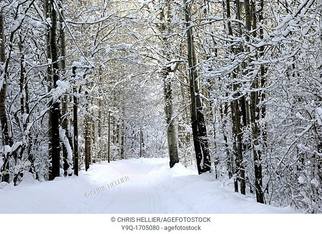 Snowy Lane or Snow Covered Track Through Forest Blieux Alpes-de-Haute-Provence France