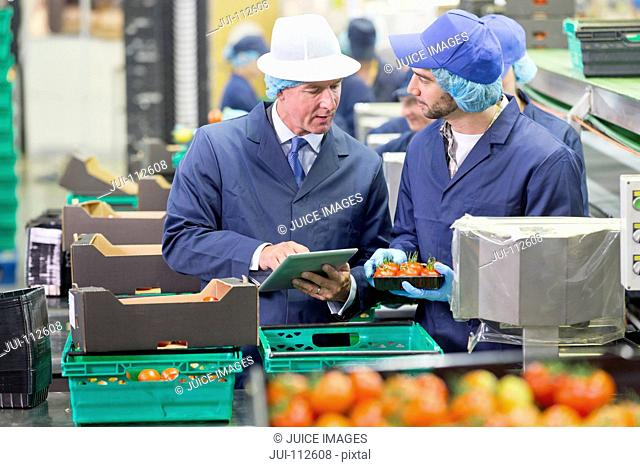 Quality control workers with digital tablet inspecting and packing tomatoes in food processing plant