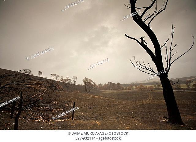 Bushfire ravaged landscape australia