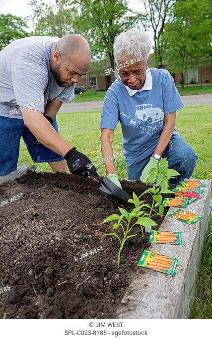 Community gardening. Members of a church planting carrots and other plants as part of a garden for the community. This community garden is being planted in the...