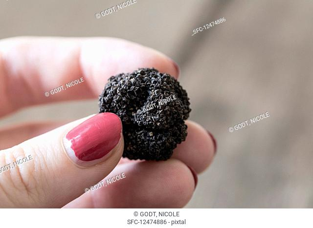 A woman holding a black truffle from Florence