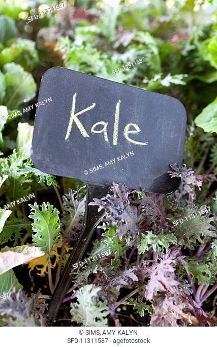 Kale at a farmer's market