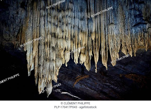 Flowstone / cave draperies, sheetlike deposits of calcite suspended from ceiling in the Caves of Han-sur-Lesse / Grottes de Han, Ardennes, Belgium