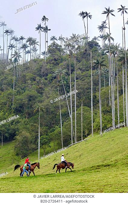Colombia, Quindio, Salento, Tourists riding horses in Valle del Cocora