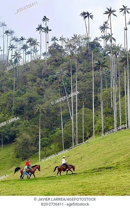 Colombia, Quindio, Salento, Tourists riding horses in Valle del Cocora