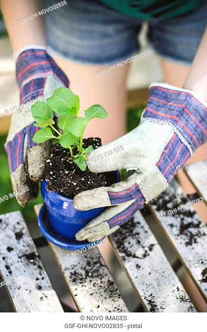 Young Woman's Gloved Hands Placing Plant and Soil into Pot