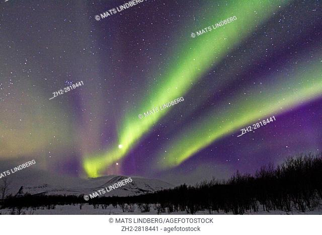Northern light, Aurora borealis, over Nikkaluokta, mountains in background, auroa are violett, green, winter season, Kiruna, Swedish Lapland, Sweden