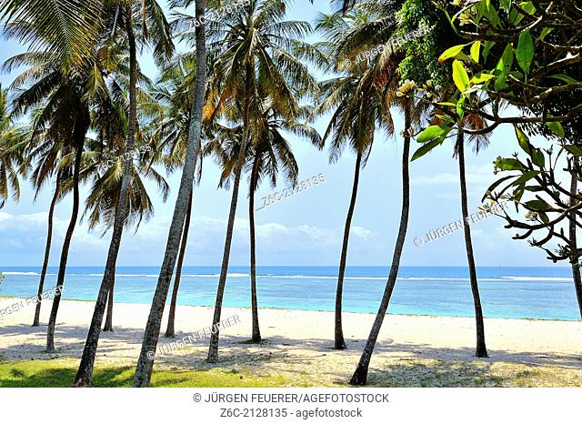 Palm-fringed beach at the southern East Coast of Kenya