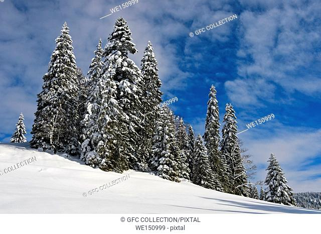 Winter landscape with snow-covered coniferous trees in the Swiss Jura mountain range near Saint-Cergue, Vaud, Switzerland