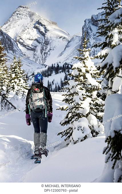 Female snowshoer on snow trail with snow covered trees and snow covered mountains in the background with blue sky; Kananaskis Country, Alberta, Canada