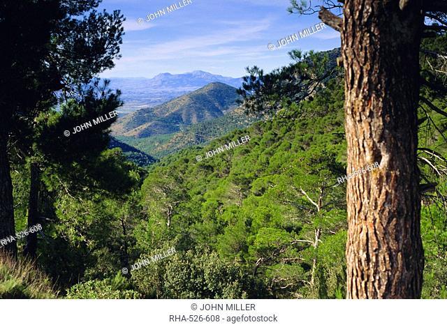 Sierra de Espuna, Murcia Province, Spain, Europe