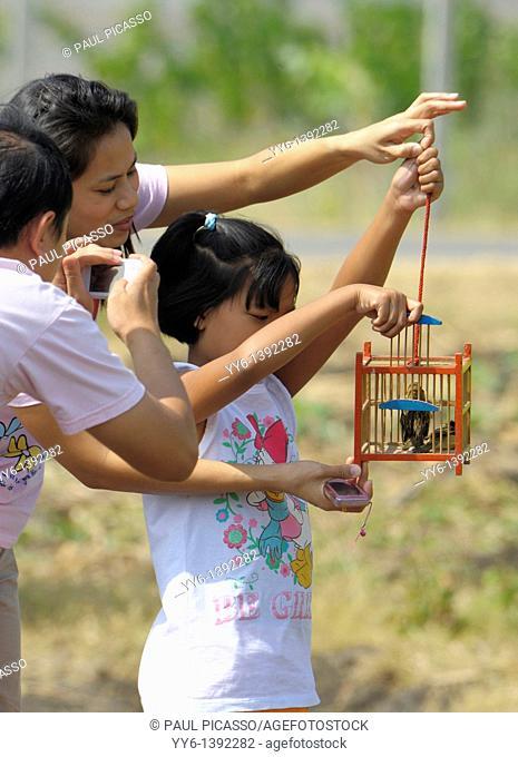 releasing birds for merit making , sunflower field , sunflower fields of lopburi , central Thailand
