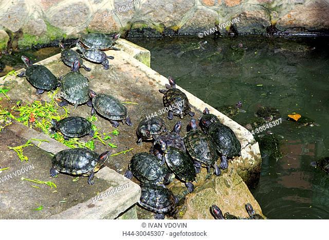 Turtles in Emperor Jade Pagoda (Chua Ngoc Hoang or Phuoc Hai Tu, Ho Chi Minh City (Saigon), Vietnam