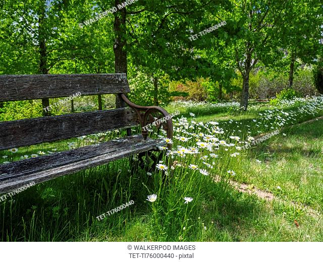 Bench among green grass and wild flowers