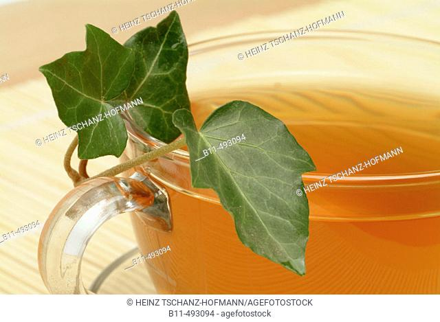 English Ivy (Hedera helix) infusion