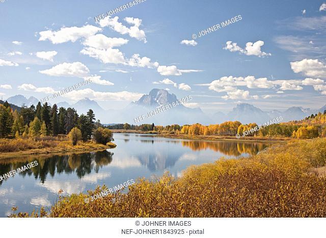 Scenic landscape with aspen trees