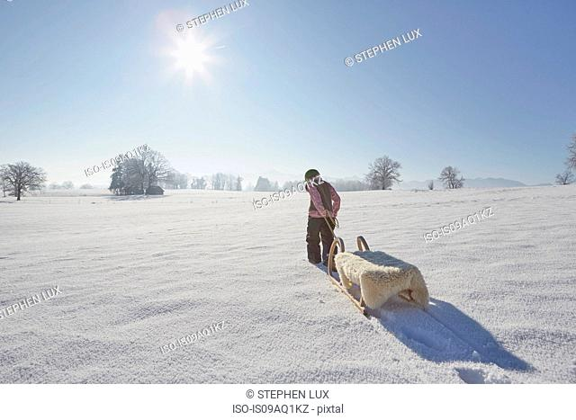 Young boy pulling sled, rear view