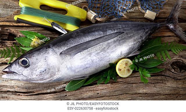 Albacore caught in sport fishing