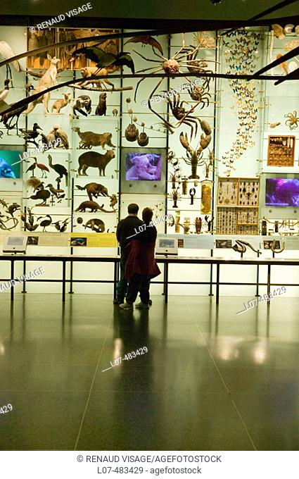 Display of animals and insects. Museum of Natural History. New York City. New York. United States