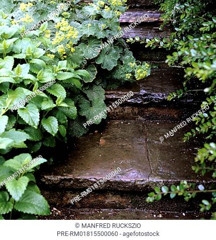 Wet garden stairs, Germany