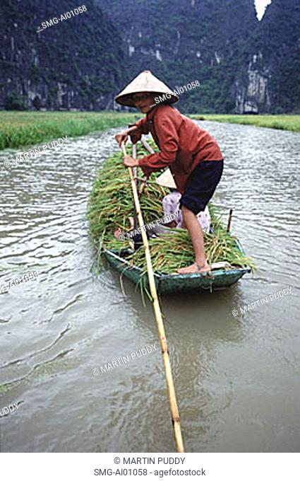 Vietnam, Perfume Pagoda, Ngo Dong River, Hanoi, woman in a boat with rice harvest