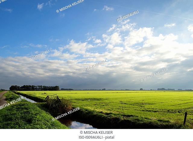 Pastures, Sneek, Friesland, Netherlands