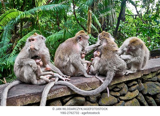 Group of macaques at Secred Monkey Forest Sanctuary, Bali Island