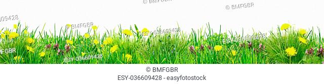 line of grass with wild flowers as kitchen background against white background
