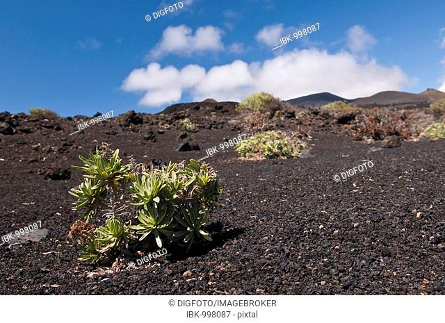 Lava fields near Fuencaliente, La Palma, Canary Islands, Spain, Europe