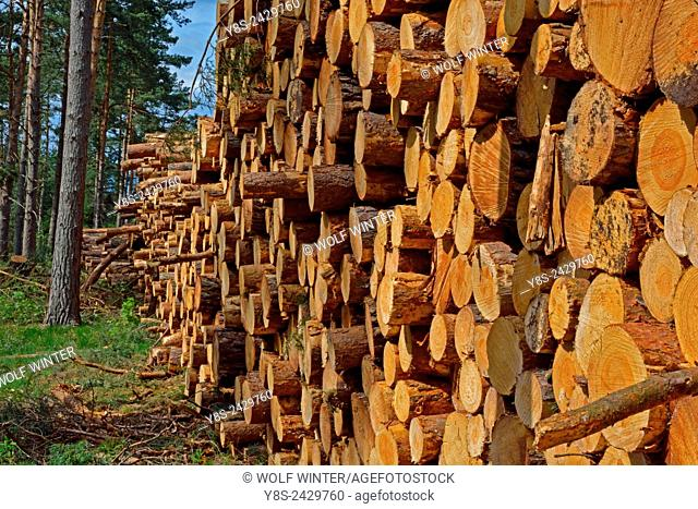 Pile of harvested wood after a Storm, Gifhorn, Lower Saxony, Germany