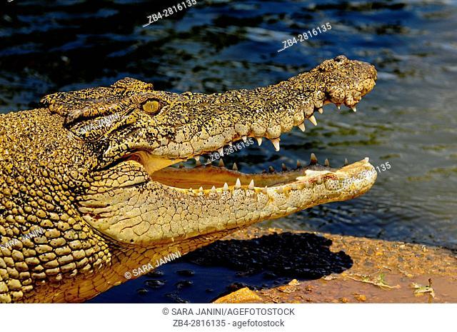 Crocodylus Park outside Darwin, Northern Territory, Australia, Oceania