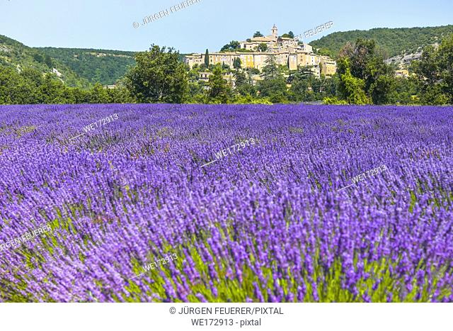 old village Banon on a hill with lavender field on its feet, Provence, France, department Alpes-de-Haute-Provence
