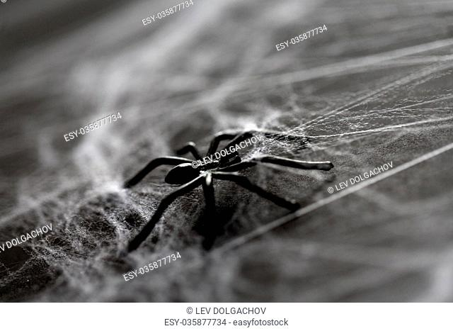halloween, decoration and horror concept - black toy spider on artificial cobweb