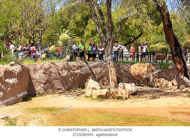 People watching a White Rhino at Reid Park Zoo in Tucson, AZ